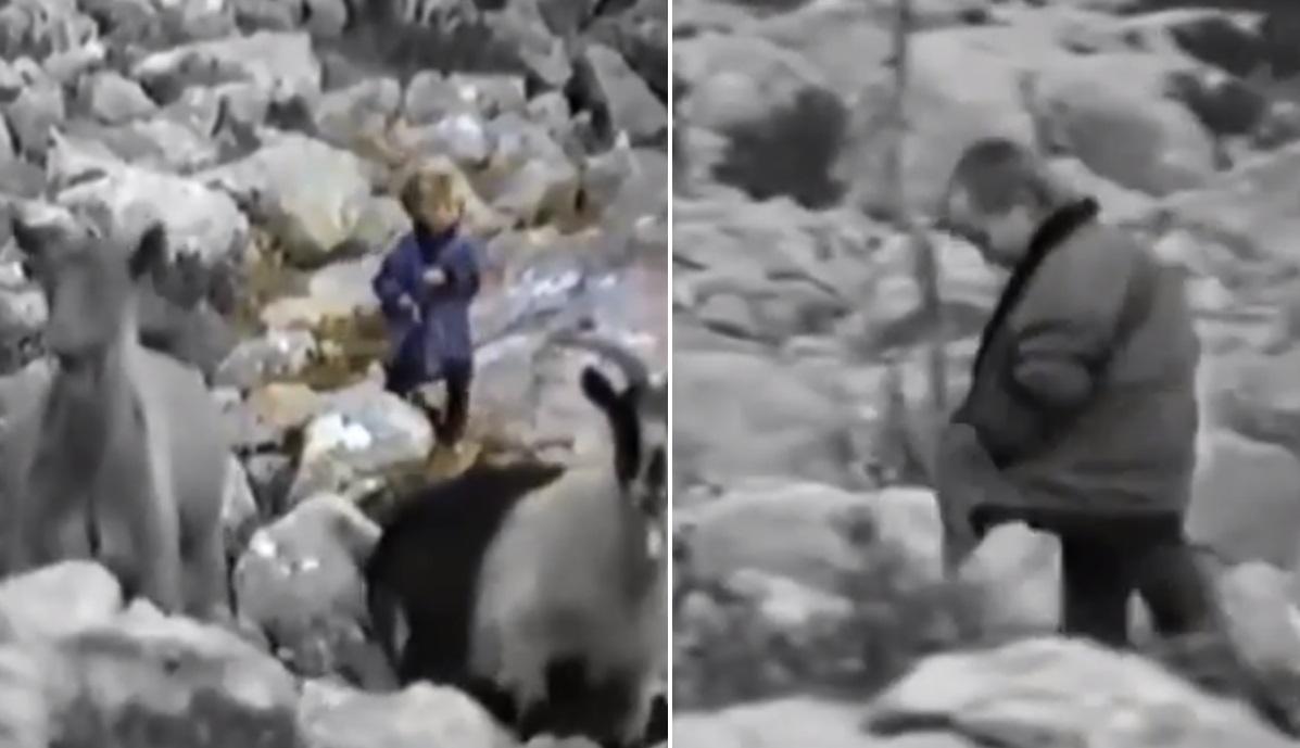 Luka Modric, çoban në moshën 5 vjeçare (VIDEO) - Insporti